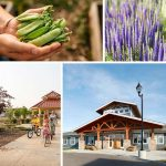 Chappelle Gardens Community
